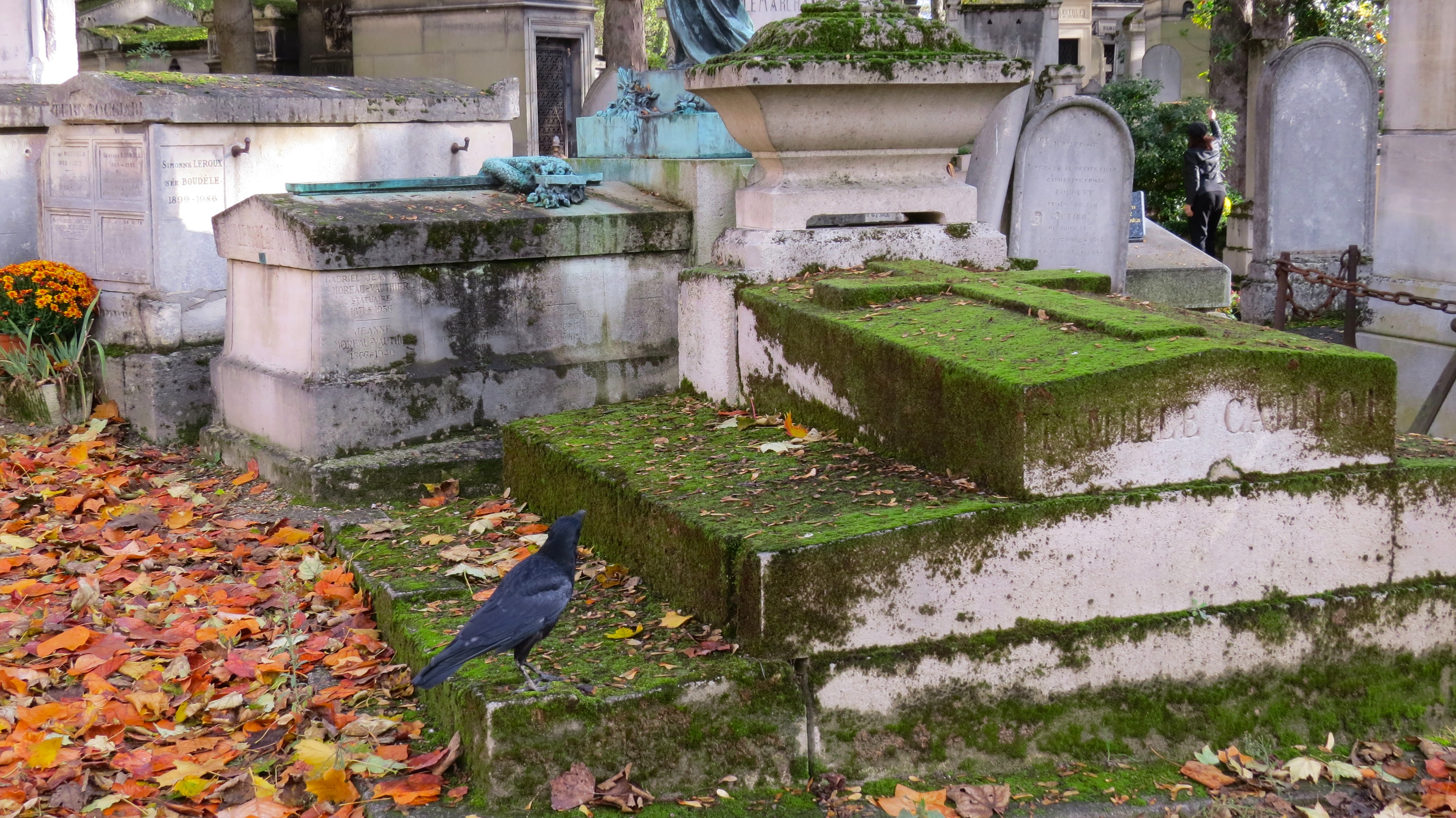 crow on grave