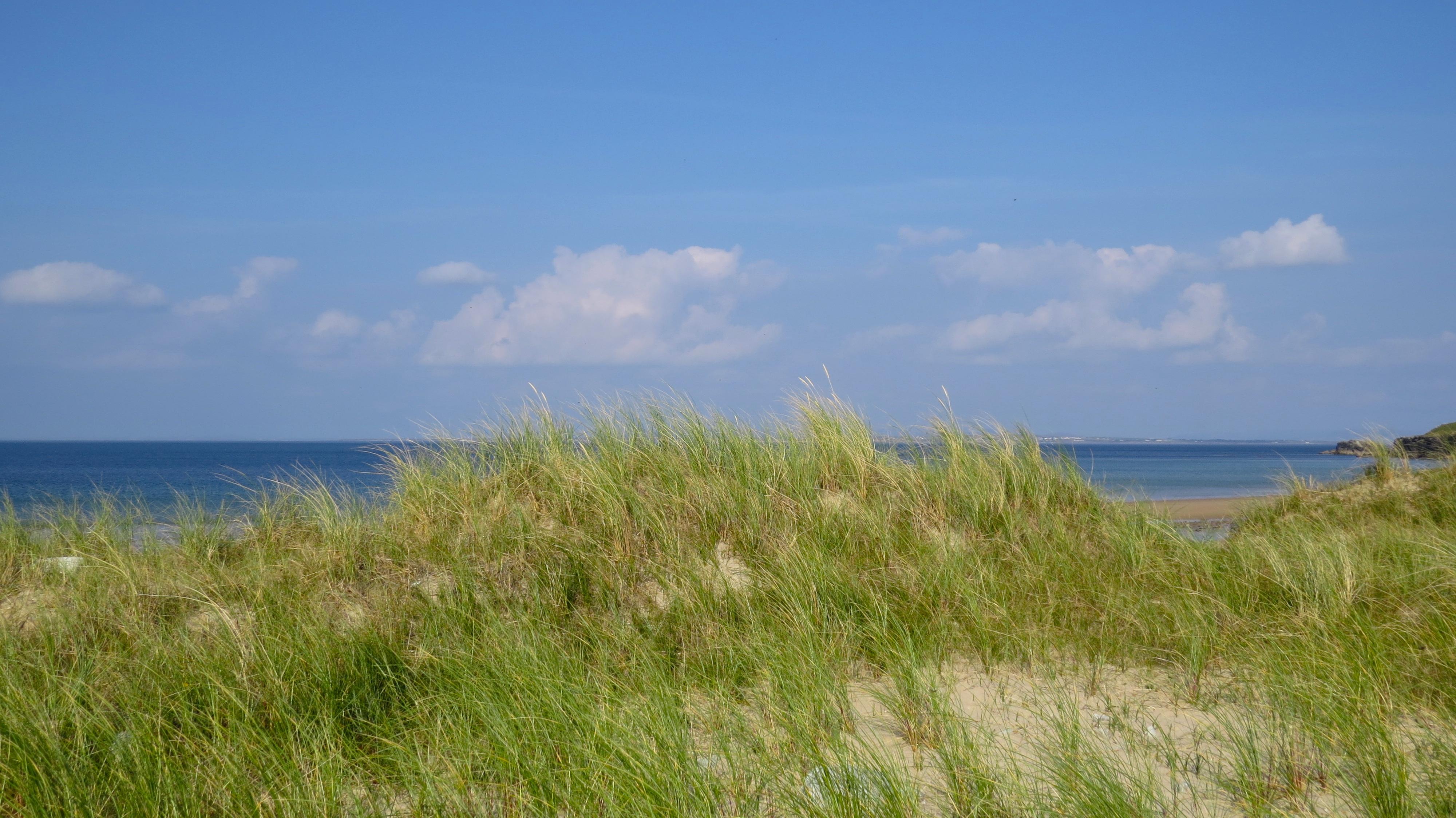 gs dune grass