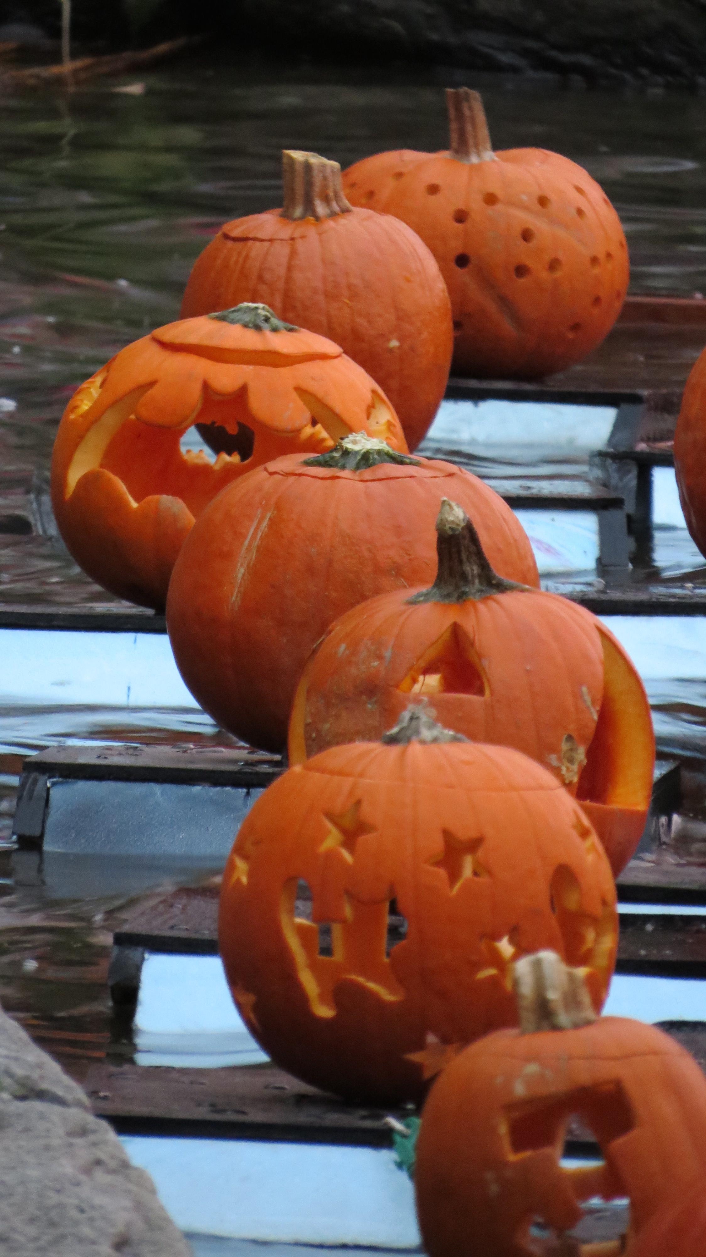 pumpkins long close-up