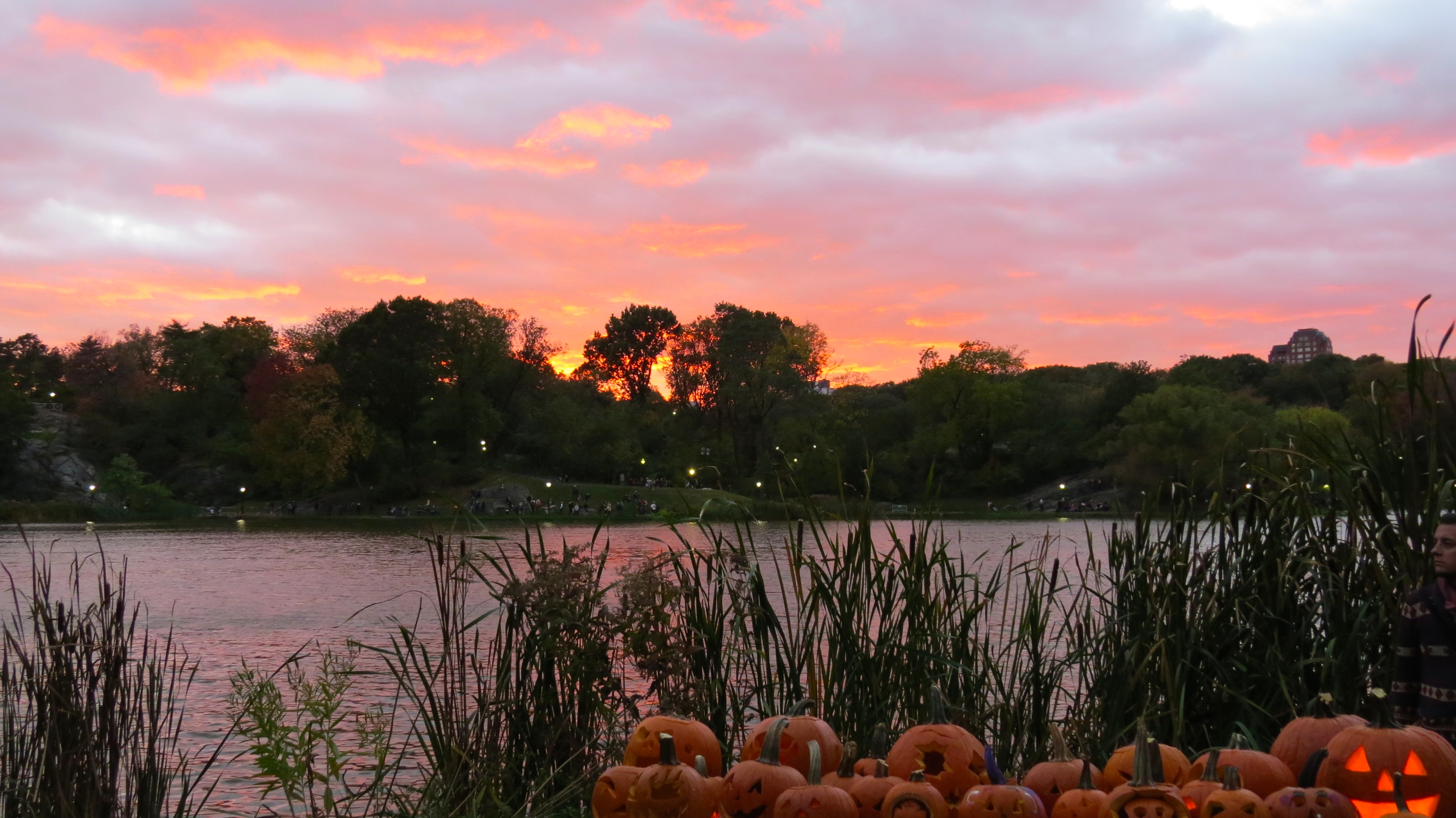 sunset 8 with pumpkins