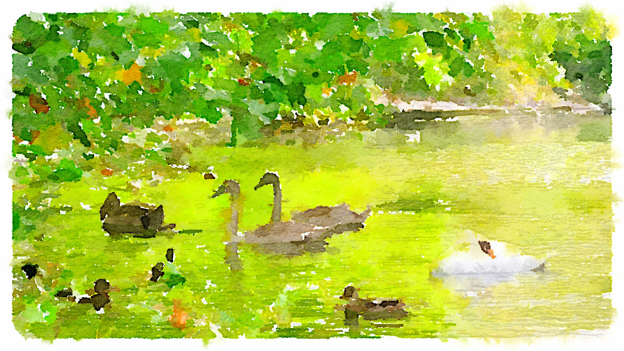 St. Stephens Green swans