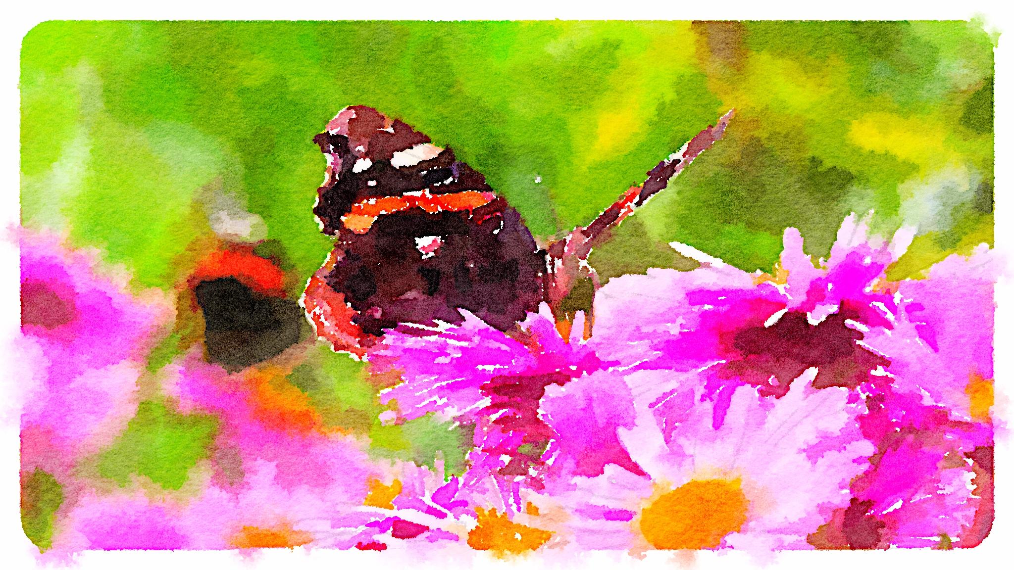 Kilmokea butterfly