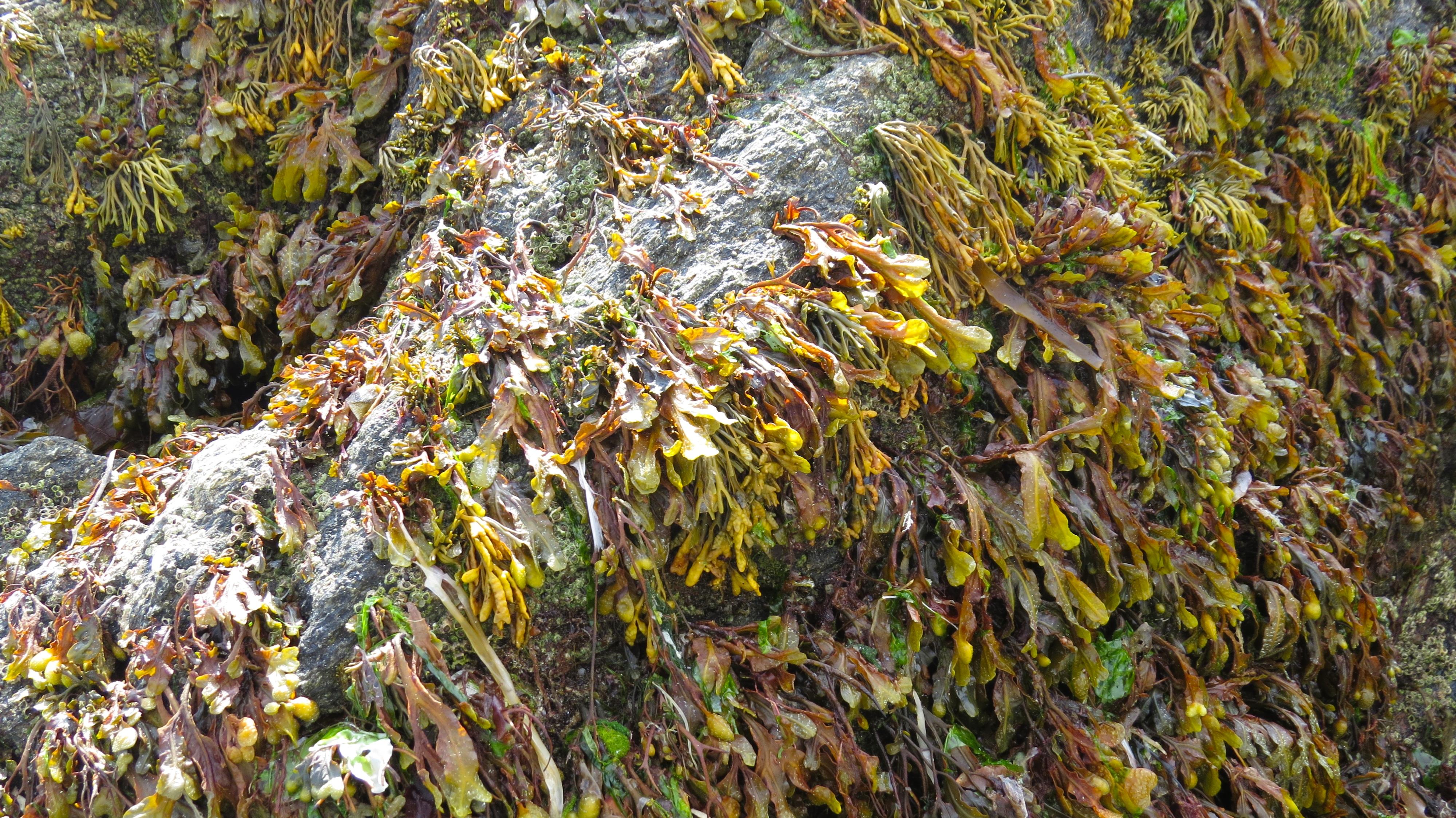 keem seaweed