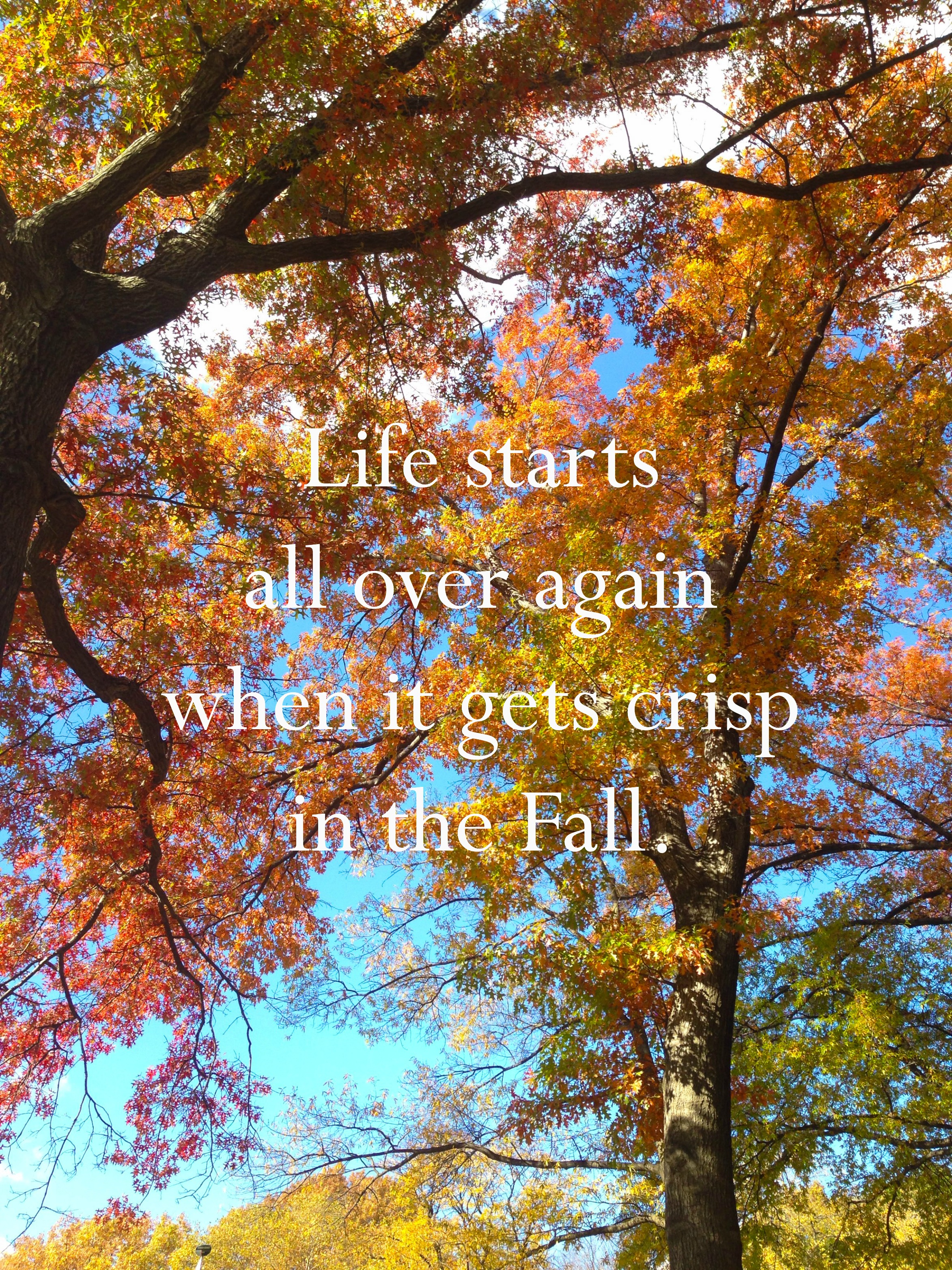 life starts all over again